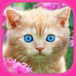 Kočky a kočičky - Vzdělávací puzzle hry pro děti
