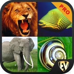 Animals Encyclopedia PRO SMART Guide