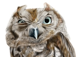 Owl - Daily Moods