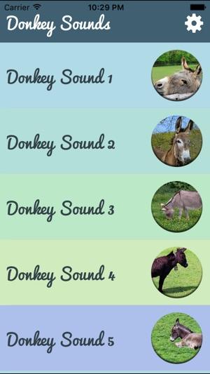 Donkey Sounds - Funny Sounds on the App Store