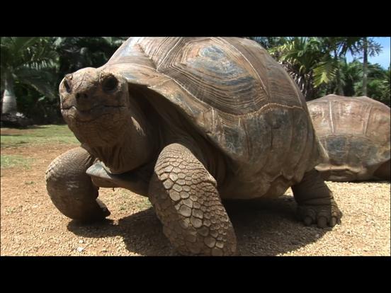 Video Touch - 野生の動物のおすすめ画像5