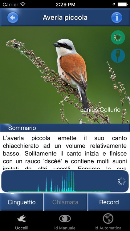 Canzoni d'uccelli