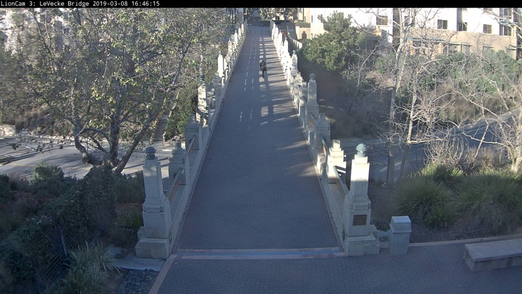 Lion Cams screenshot-4