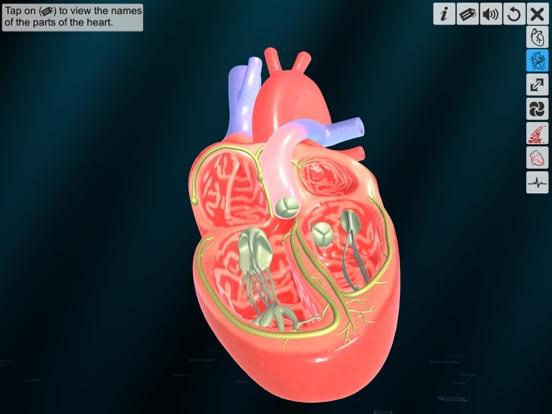 Heart - An incredible pump screenshot 9