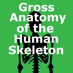 Human Skeleton: Gross Anatomy