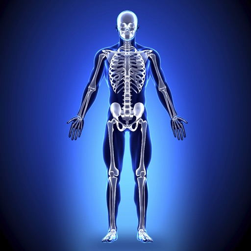 Anatomy - Skeletal System