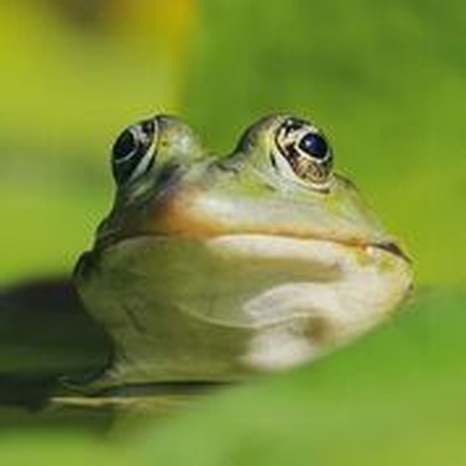 Frog Sounds Effects