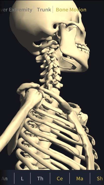 3D motion anatomy teamLabBody