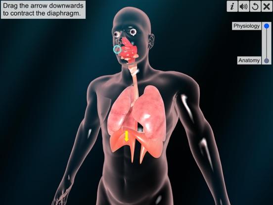 Respiratory system physiology screenshot 11