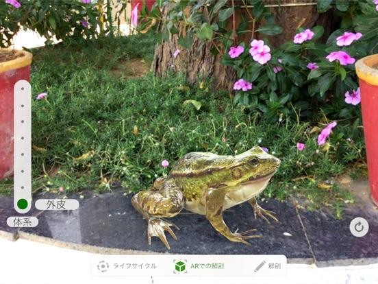 Froggipediaのおすすめ画像2