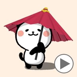 Kitty Panda 12