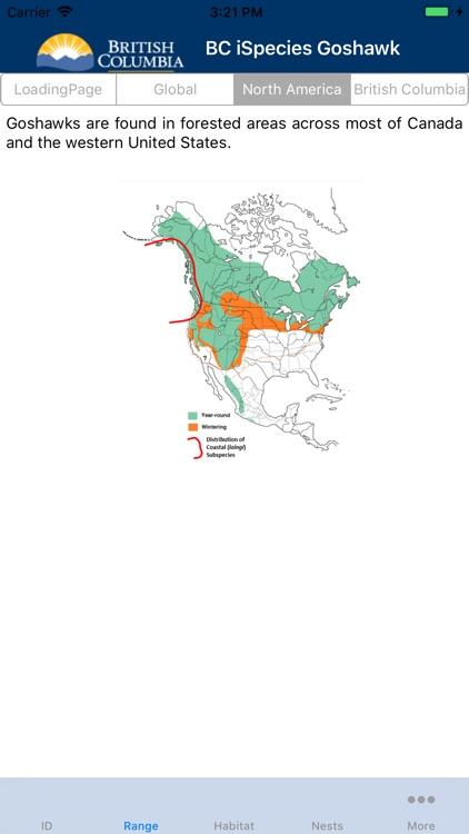BC iSpecies Goshawk