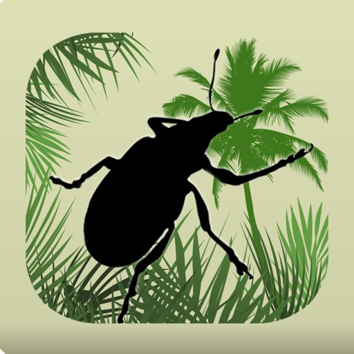 Palm Pests Key