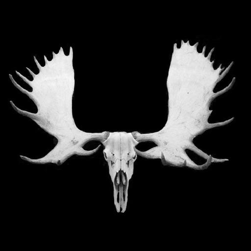Moose Hunter