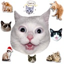 Cat Stickers For Chat