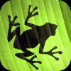 Jumping Frog Strategy