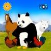 全部找到它们:寻找动物 – 儿童教育游戏