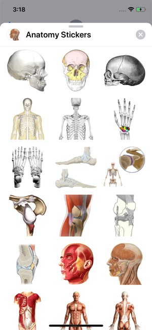 Anatomist – Anatomy Quiz Game on the App Store