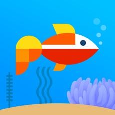 Activities of Aquarium Idle