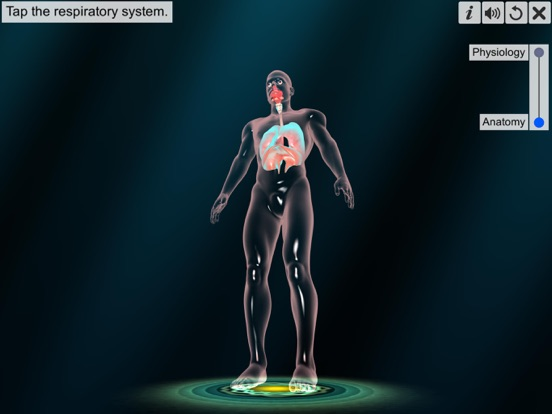 Respiratory system physiology screenshot 8
