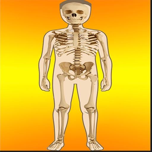 Body Parts - Internal icon
