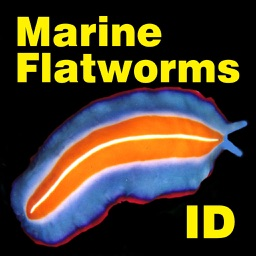 Marine Flatworms ID