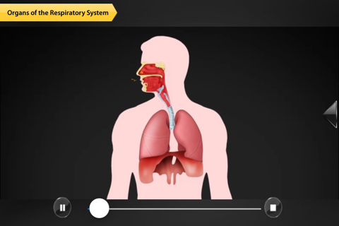Human Anatomy for iPhone - náhled