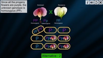 Test Cross: pea flower screenshot 4