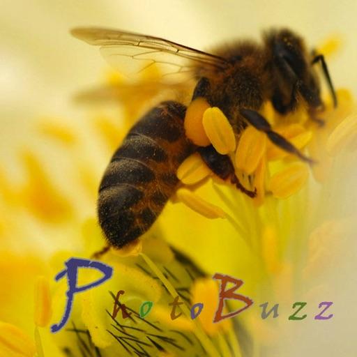 PhotoBuzz for iPad - Public Web Album Explorer