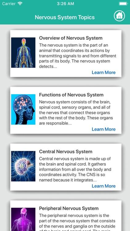 Human Anatomy : Nervous System