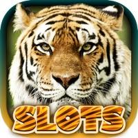 Codes for Wild Tiger Slots Machine Games Hack