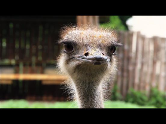 Video Touch - 野鳥のおすすめ画像5