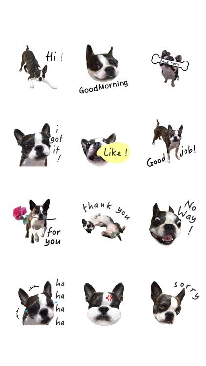 Boston Terrier Animation screenshot-4