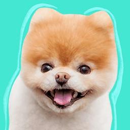 Boo: World's Cutest Dog
