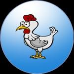 The Chicken World