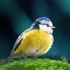 Oiseaux en poche