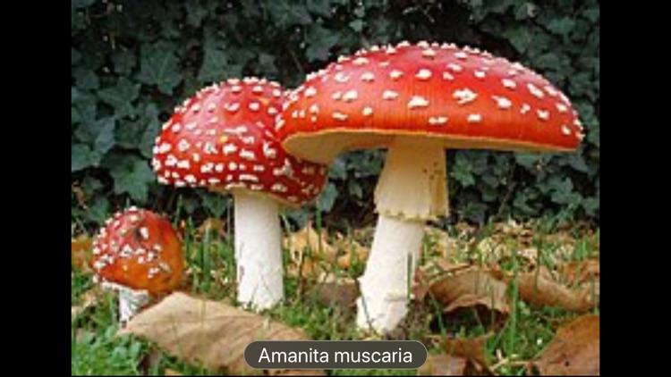 Fungi screenshot-3