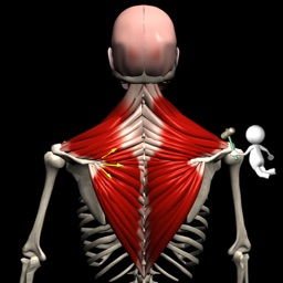 Anatomy by Muscle & Motion