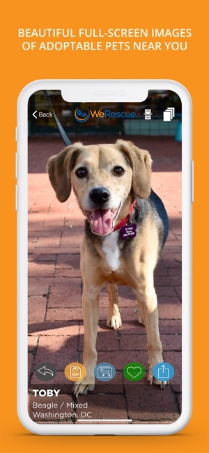 WeRescue – Adopt a Pet on the App Store