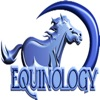 Equine Anatomy Learning Aid