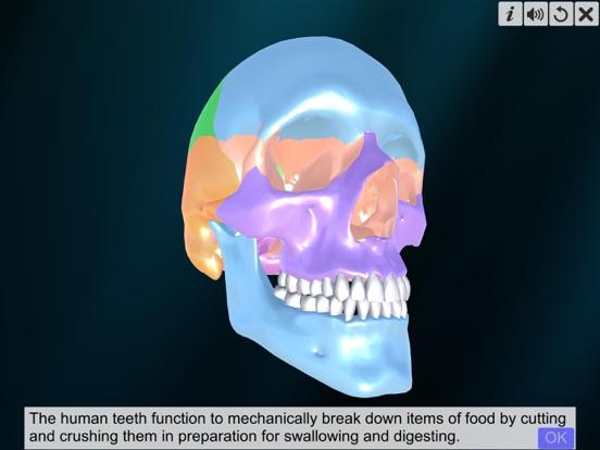 Incredible Human Teeth screenshot 8