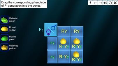 Dihybrid cross screenshot 4