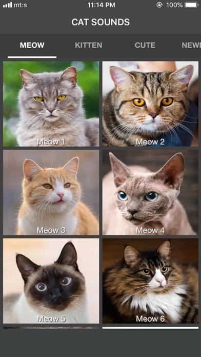 Cat Sounds - ColecciónCaptura de pantalla de1