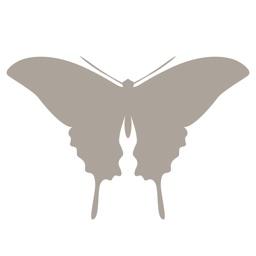 Fieldstone Guide: Butterflies