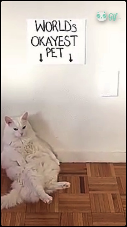 Cat GIF TV