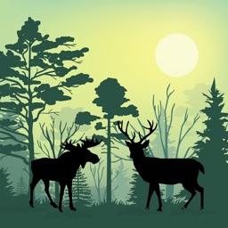 Forest Animals Simulator