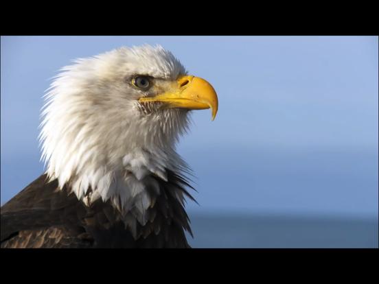 Video Touch - 野鳥のおすすめ画像2