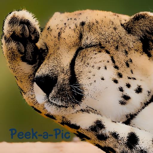 Peek-a-Pic