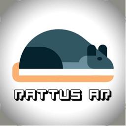Rattus AR