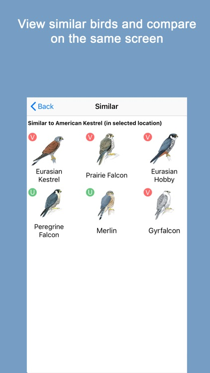 Sibley Birds 2nd Edition screenshot-4
